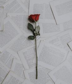 Las 10 cartas de amor más bellas de la historia